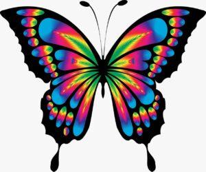 farfalla colorata rappresenta i colori